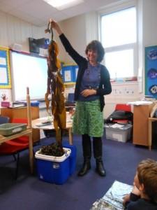 Luing Seaweed 2