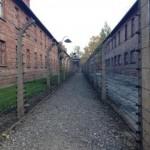 DGS Auschwitz 1