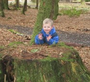 Rothesay PRE5 Jake tree