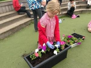 Colgrain June 16 P4 Planting