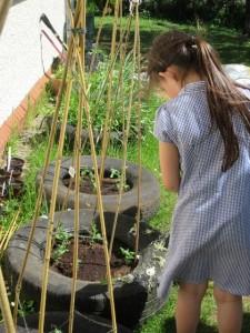 Salen Gardening Diary 2 June 1 2016