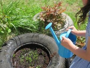 Salen Gardening Diary 2 June 2 2016