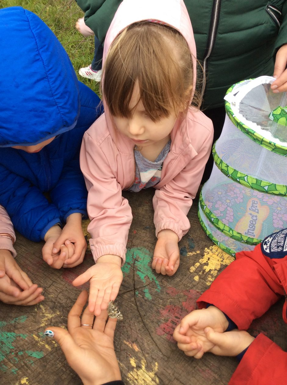 Learning about caterpillars