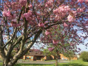 calside spring
