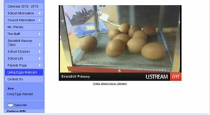 Egg Incubator