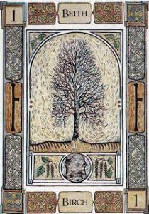 beith-birch-tree