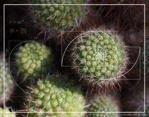 spiral4-s