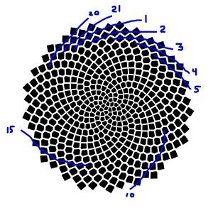 spiralsBlue