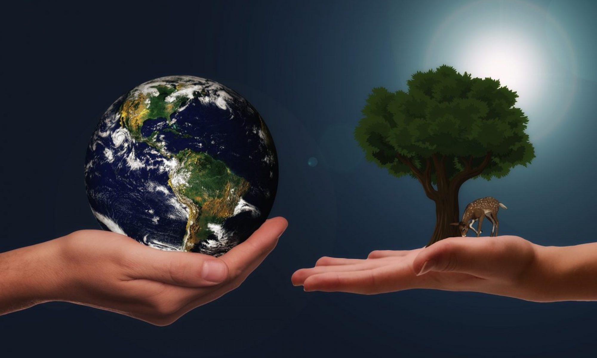Ross's Sustainable Development Reflective Blog