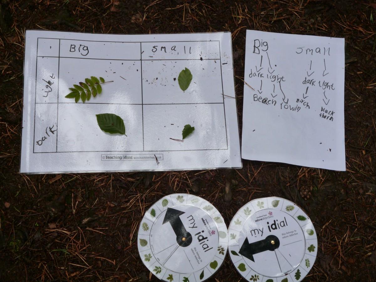 Carroll Diagrams  U2013 Leaf Keys