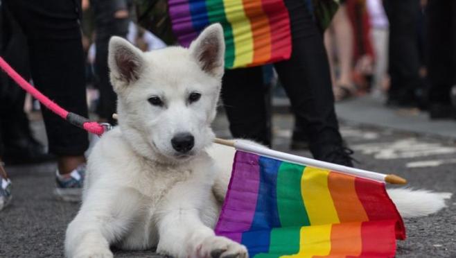 BHS Pride Alliance