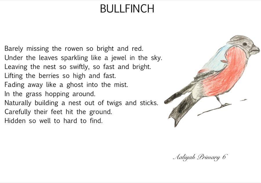 Bulfinch Aaliyah