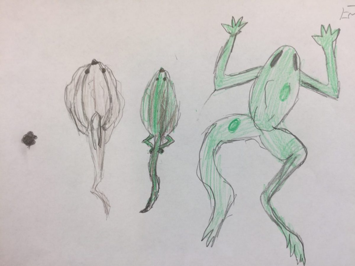 The cycle of frogs – Emma