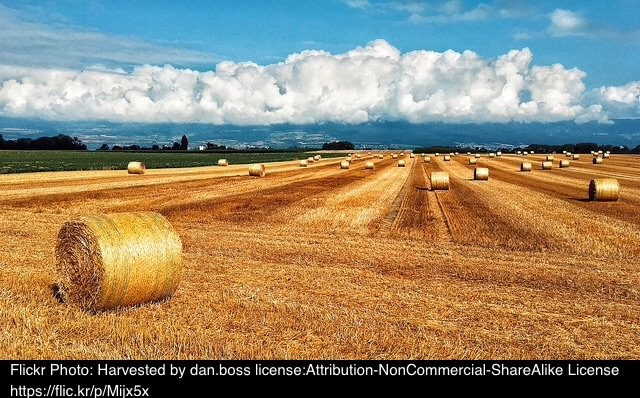 Harvest Assembly