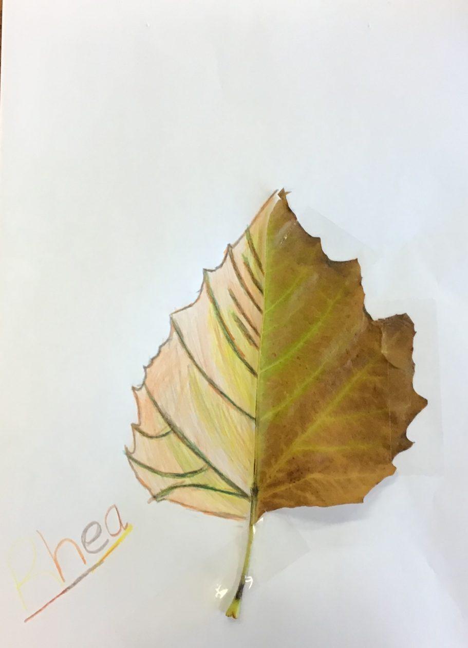Leaf art Rhea