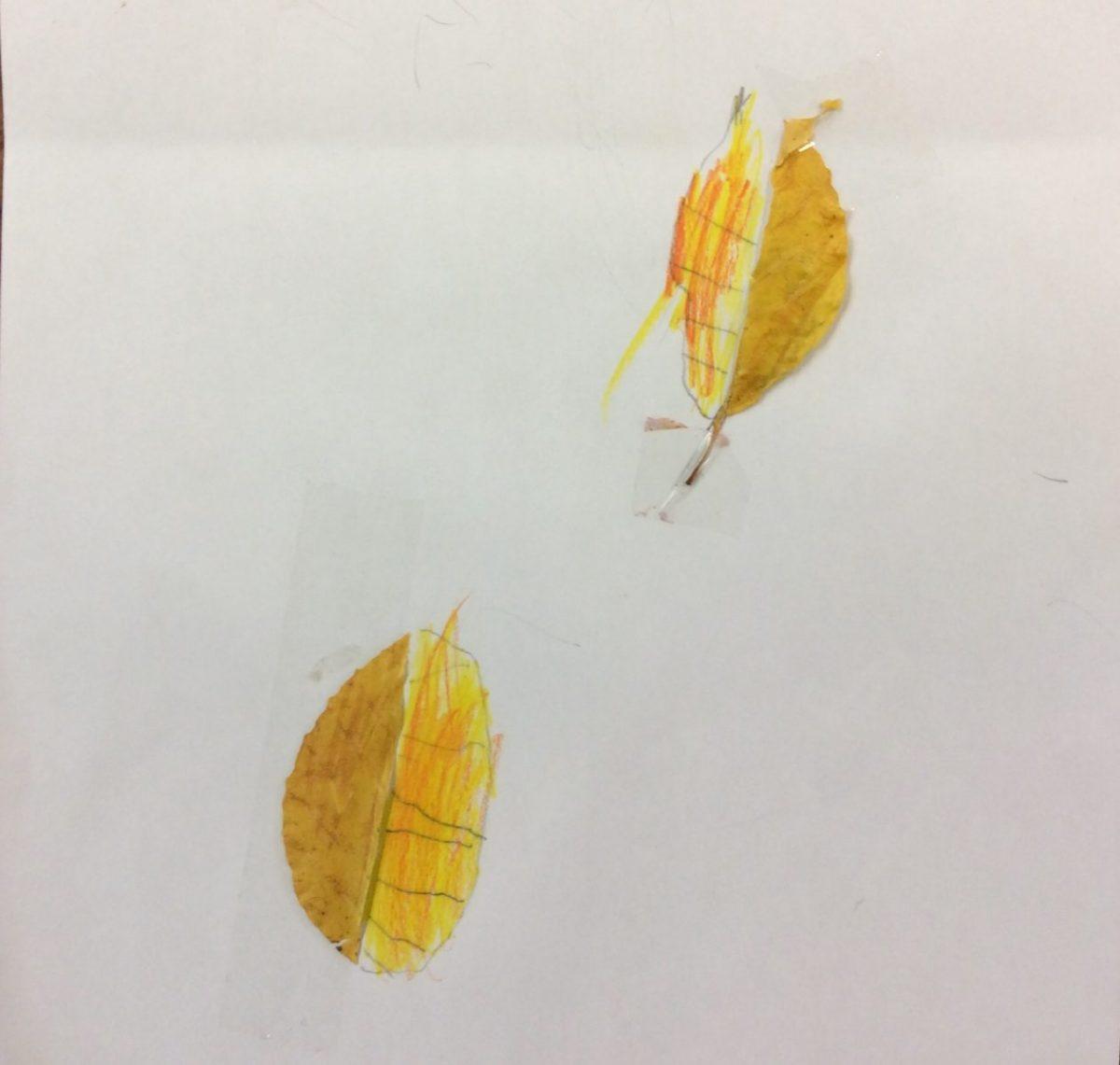 Leaf art 🍂
