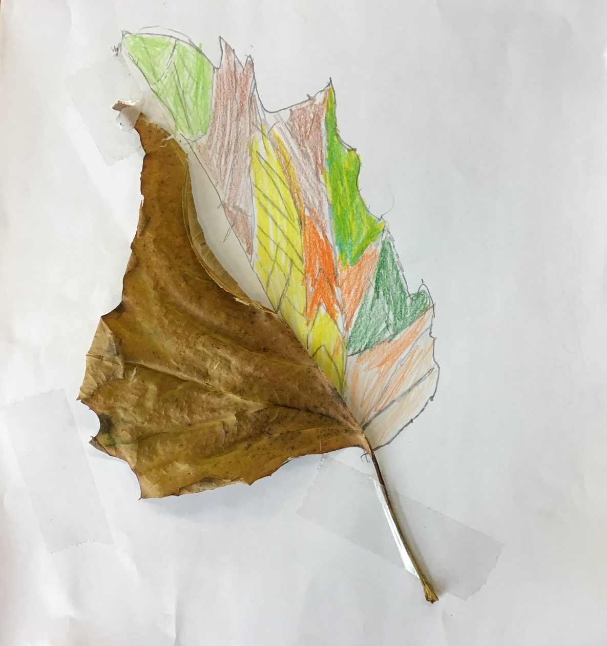 Leaf art🍂
