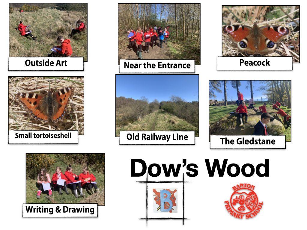 Dows Wood Visit