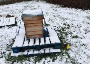 snowy-bee-hive