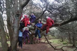 Tree climbing or folk music album cover?