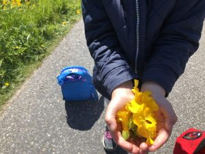 A handful of flowers