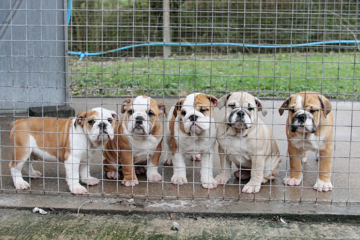 Victory: New Law For Puppy Farming